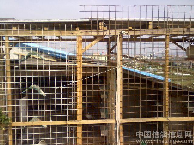 农村小型鸽笼设计图