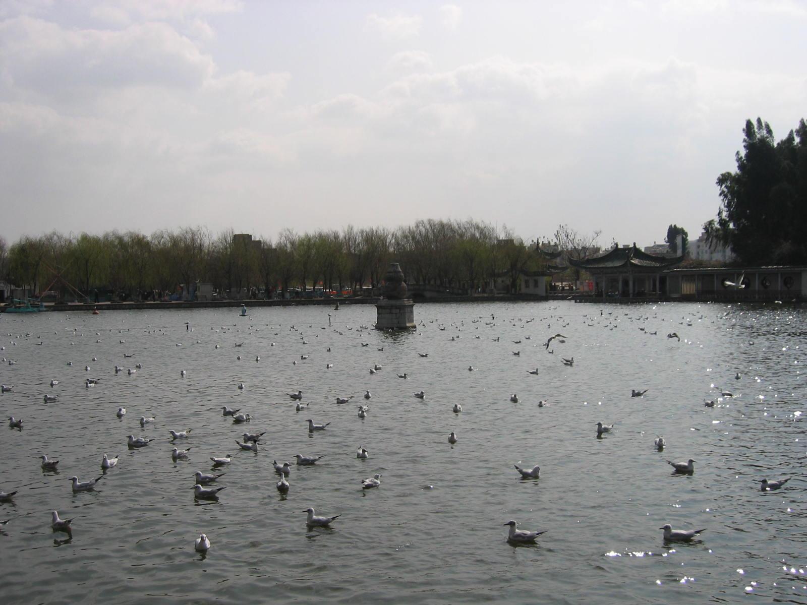 昆明春天--中国信鸽信息网相册