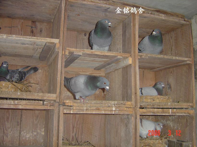 中国 建造/鸽舍建造//中国信鸽信息网相册...