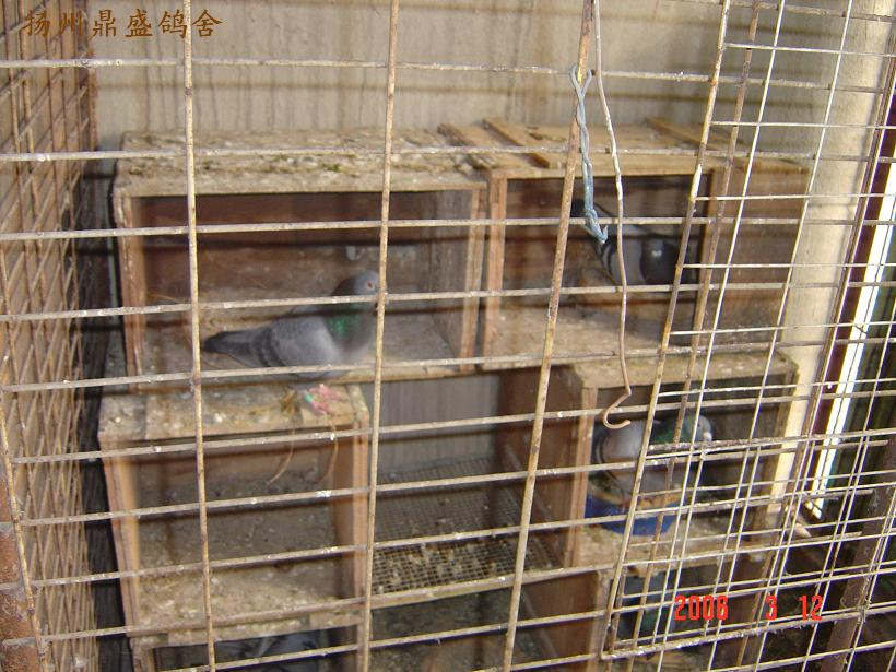 农村小型鸽舍建造图片_简单小型鸽舍建造图片-穷人养20只鸽子棚图-1米小型鸽舍图-1平方 ...