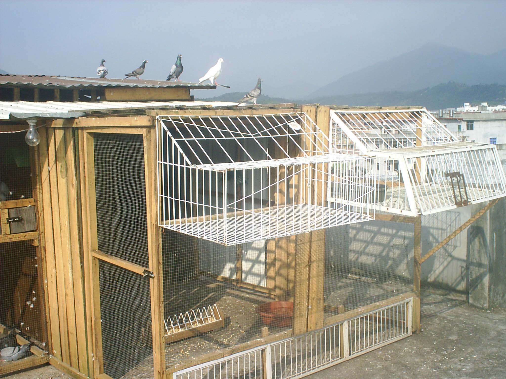 鸽棚上捕鸽笼设计图