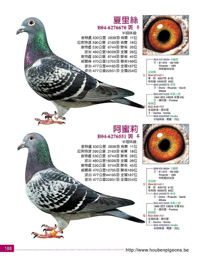 我的鸽子生活续( 爱鸽生活 最后一组12年春 眼睛 狗 装了鸽友通,鸽友
