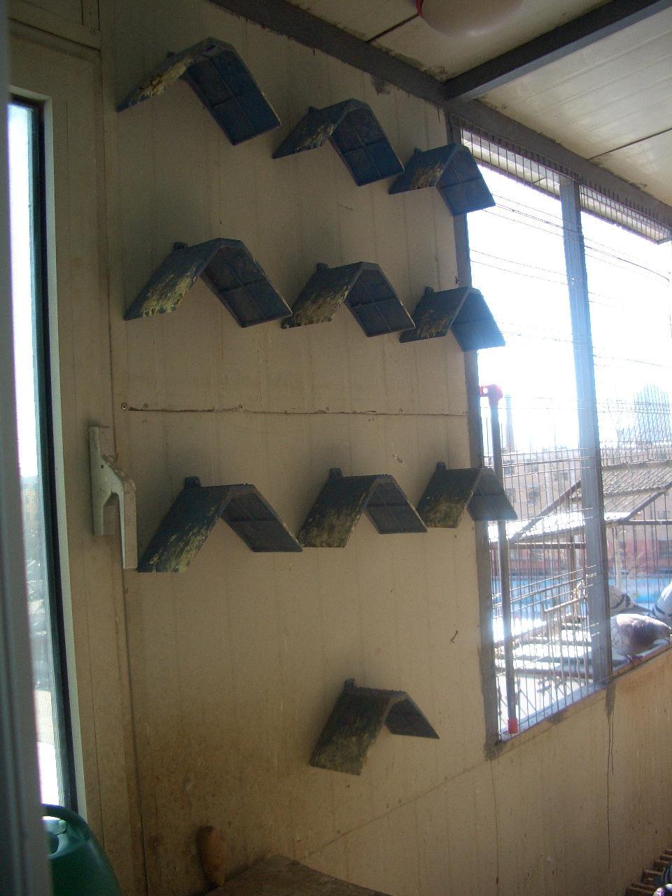 评论者:cnb-ning    时间:2008-7-31 17:34:00 我想阳台上养鸽子,三楼