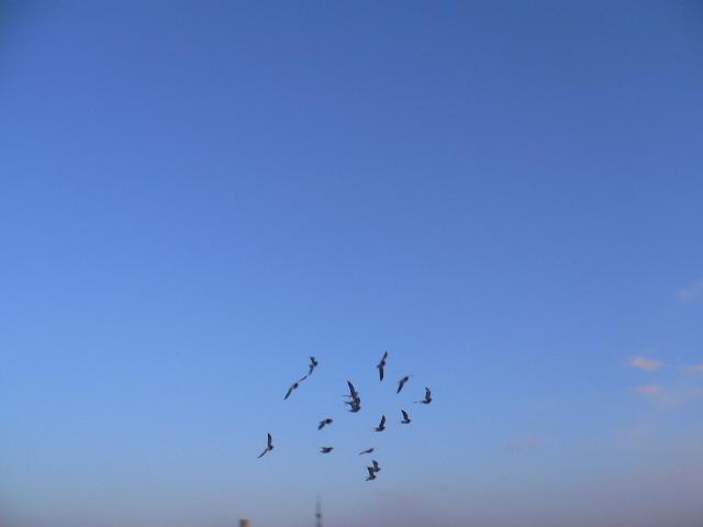 鸽子天空飞翔网店素材