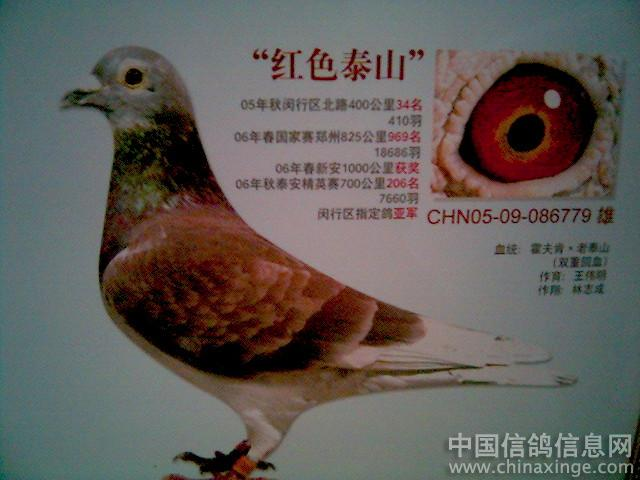... 分公母图解蚕蛾怎么分公母图解鸽子怎么分公母图解