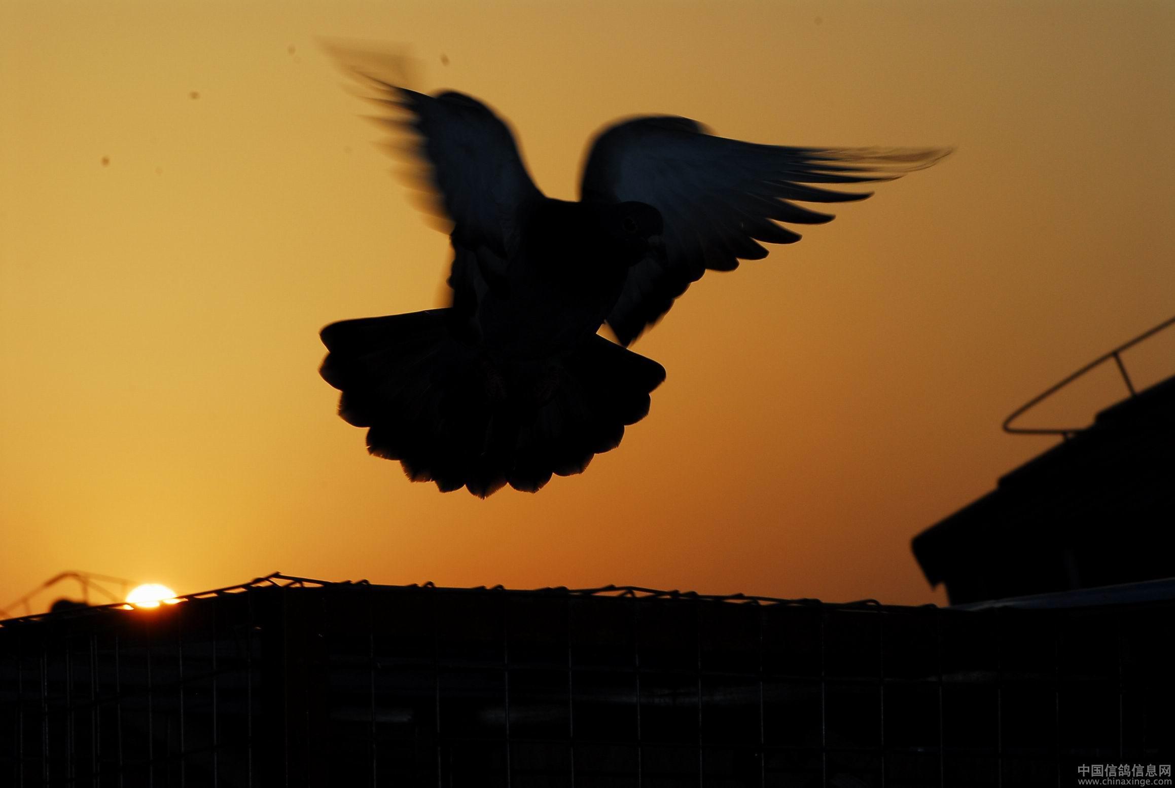 舞者无疆:天涯海角的蓝色天使
