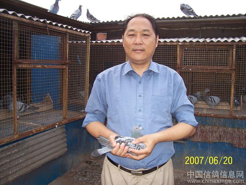 昆山放飞西宁的鸽子首羽归巢 中国信鸽信息网 高清图片