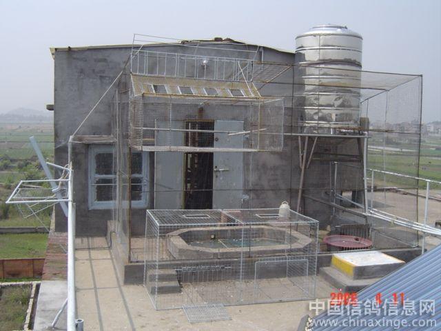 鸽舍--中国信鸽信息网相册-农村简陋鸽棚图片 不花钱做鸽棚图片 小型图片