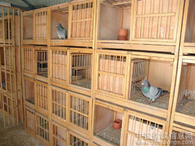 鴿子籠子內部設計圖