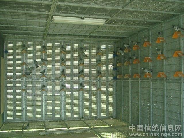 台湾 我的鸽舍