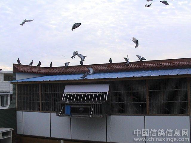 窗台鸽棚设计图