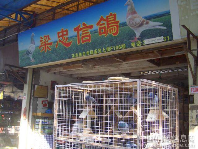 广州鸽市剪影