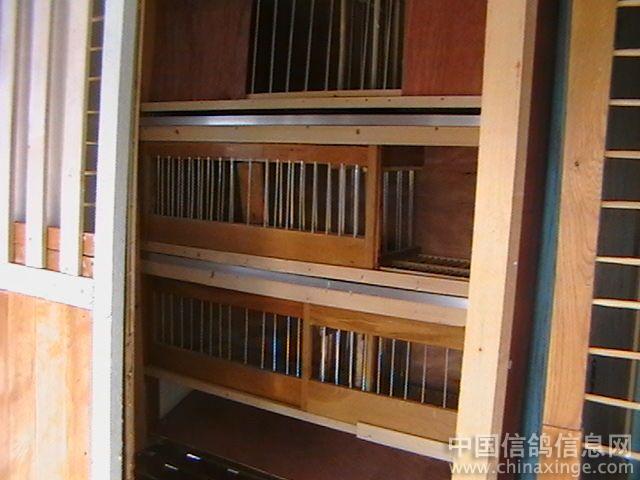 结果是,你的鸽子笼在通风,环境卫生不能保证,安全和内部设置等封面都