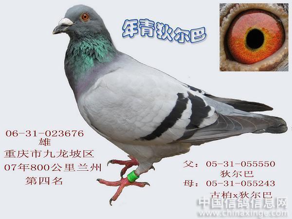 李氏族徽里是什么动物