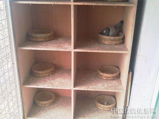 3月24日惊险训放猫箱子设计图图片