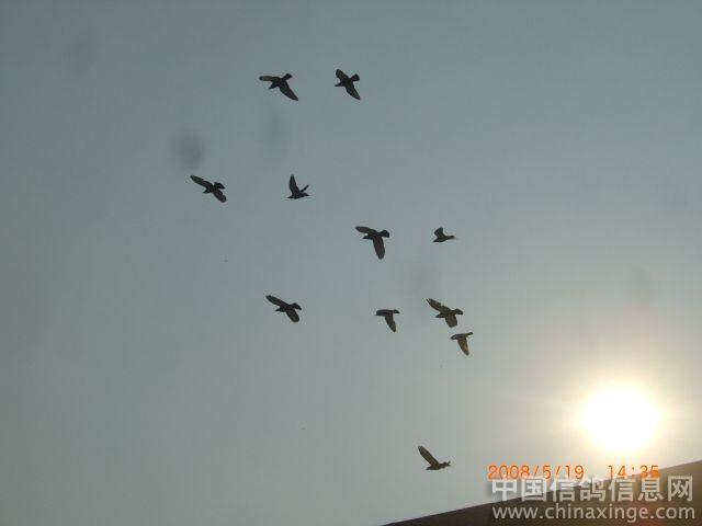 放飞和平鸽图片简笔画-和平鸽的简笔画图片_小孩放飞