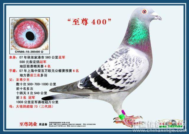 节气鸽动物鸽子图示鸟蜜蜂640_457鸟类二四教学管图片