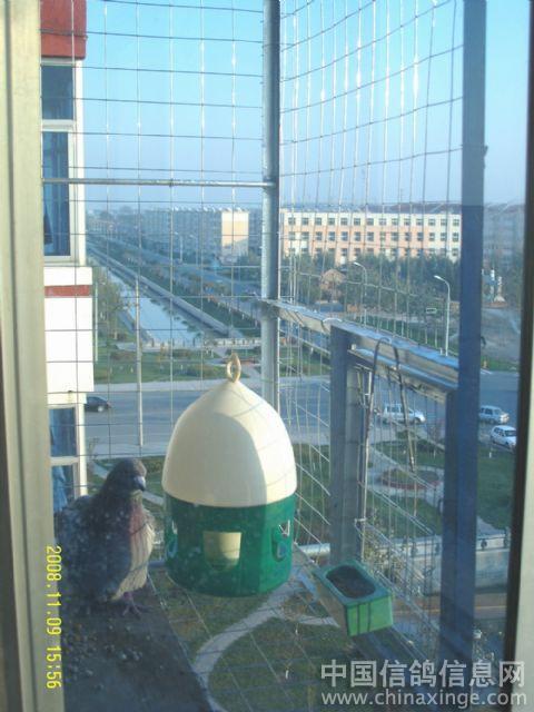 阳台外鸽舍--小小鸽子笼