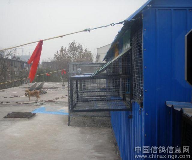 翔宇鸽舍--中国信鸽信息网相册-农村简陋鸽棚图片 不花钱做鸽棚图片 图片