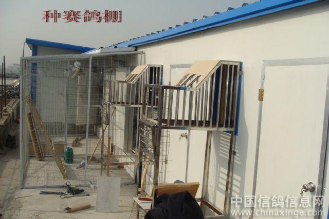 时间:2008-12-12 11:11:00 我看还是你的老棚更适合养鸽子!
