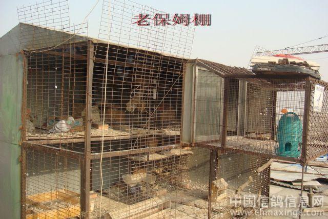 鸽子养殖棚设计图片展示