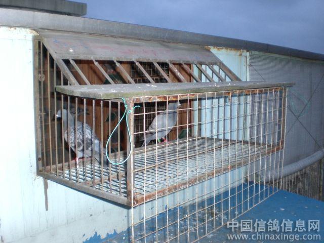 赛鸽子笼设计图展示