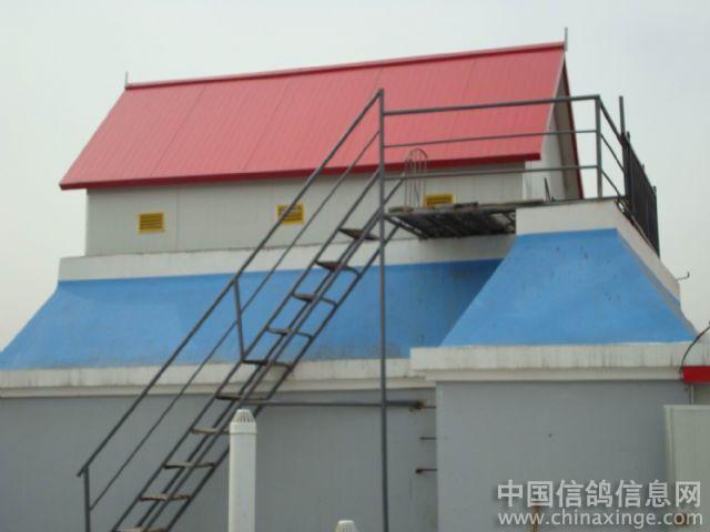 宅上新建 红顶鸽舍 ,希望将来赛鸽事业开门红,样样红.. ---中国信