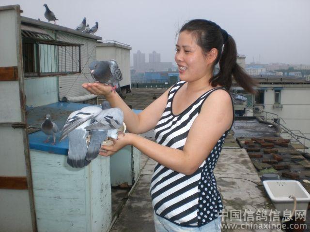 图库经典:爱妻是我养鸽子的好帮手