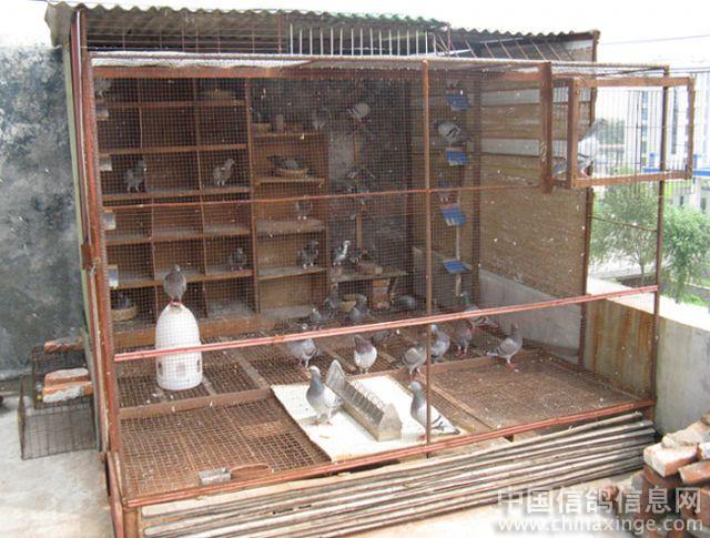 赛鸽笼的建造