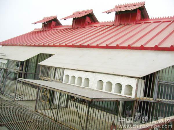 比利时赛鸽鸽舍图片赛鸽鸽舍内部图片赛鸽名家的鸽舍图片; 台湾赛鸽冠
