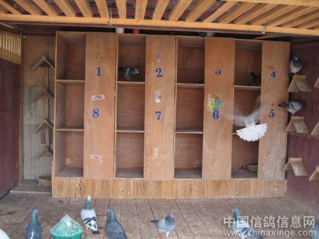 安顺阳子鸽舍--中国视频信息网相册信鸽科普消防图片