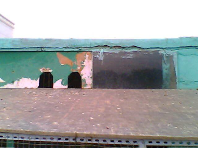 信鸽鸽舍建造装秀-幼鸽赛棚 装一块玻璃可以更好的采光