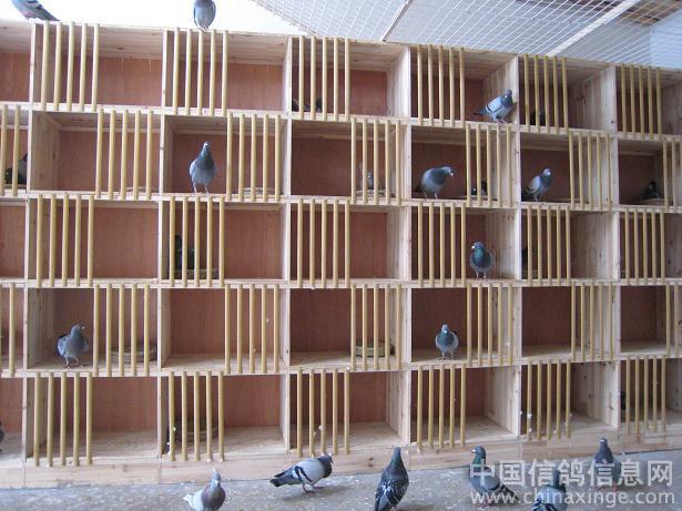 分类检索+鸽舍装修斜顶挑高楼层建造设计图图片