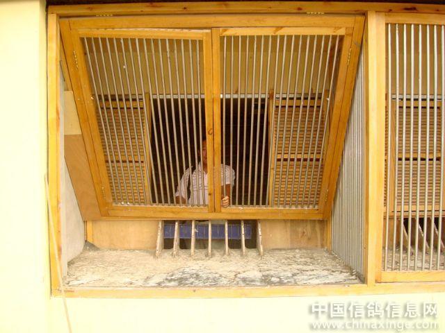 廊坊友新鴿業賽鴿棚_我愛信鴿網; 賽鴿棚進口設計壁紙圖片