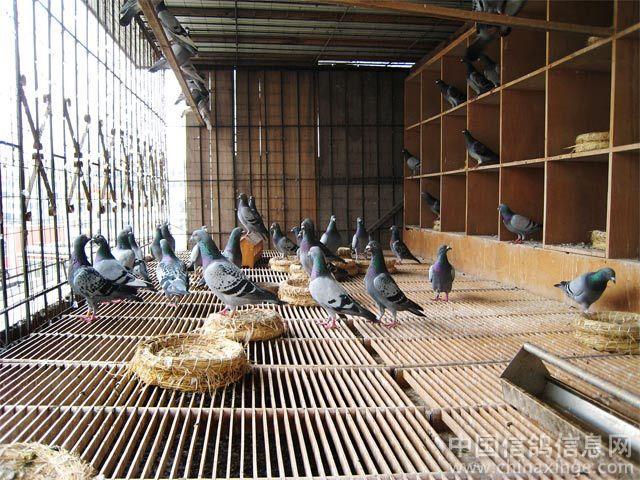信鸽鸽舍撞门设计图图片大全 大型狗笼子设计图