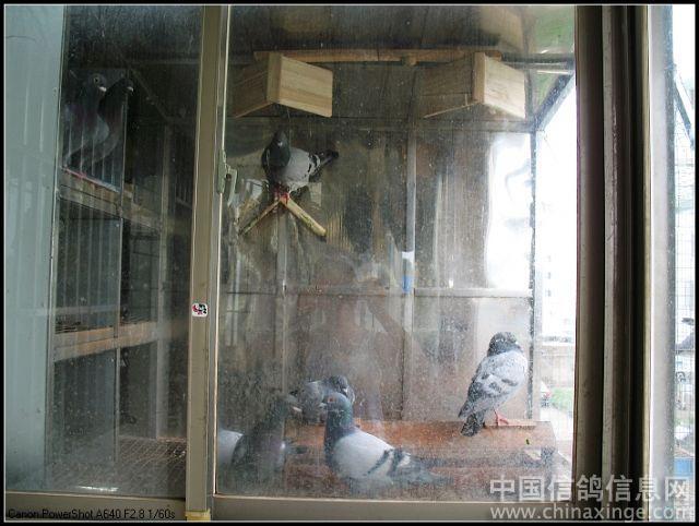 我的袖珍鸽舍 阳台图片