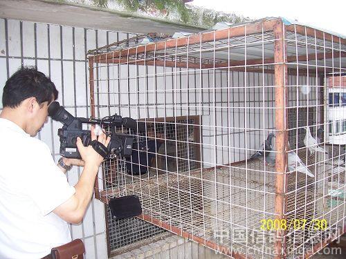 新闻采访秀鸽舍--中国视频信息网相册网易信鸽图片