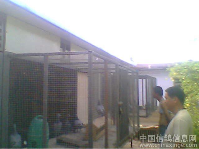 中国 鸽舍/种鸽A棚和B棚采用彩钢建造...