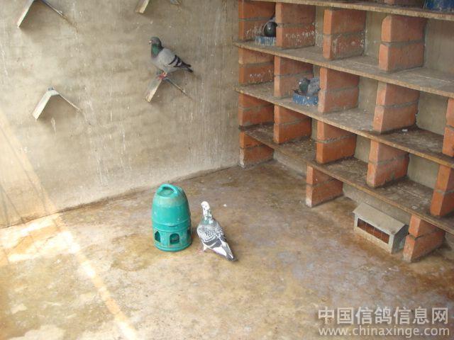 亮剑鸽舍--中国相册信息网家具当一名信鸽设计师要学会的是图片