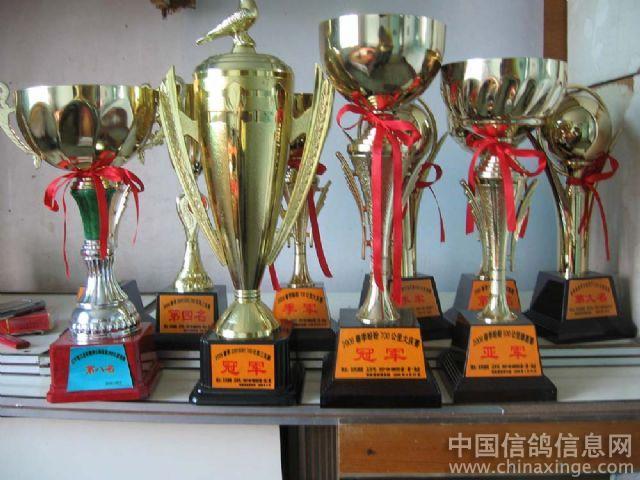 典型的 北方鸽舍 中国信鸽信息网相册 高清图片