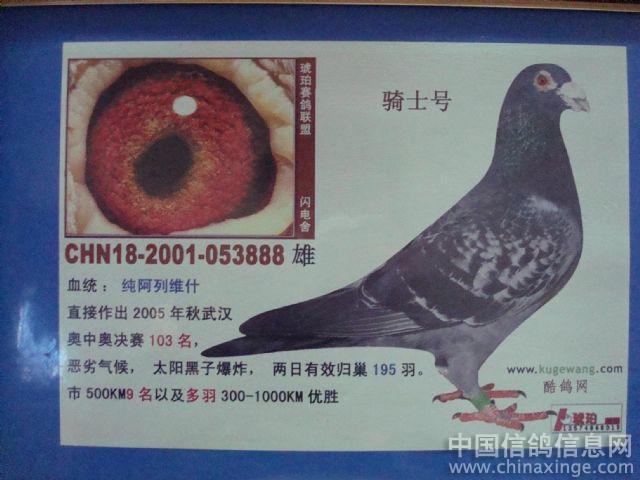 -002270雨点白条,黄,杨阿腾雌直女获得2008年春季长沙市700公图片