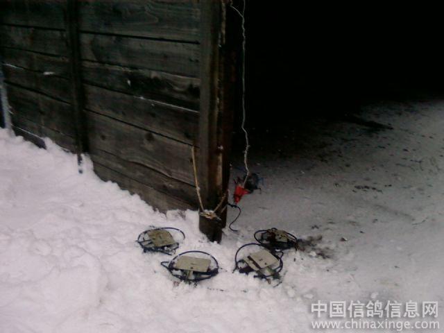 陷阱--中国信鸽信息网相册; 捕鸽子陷阱图片_怎样捕鸽子图解,捕鸽子