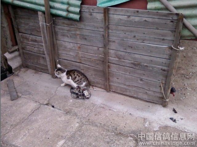 捕猫陷阱制作图解