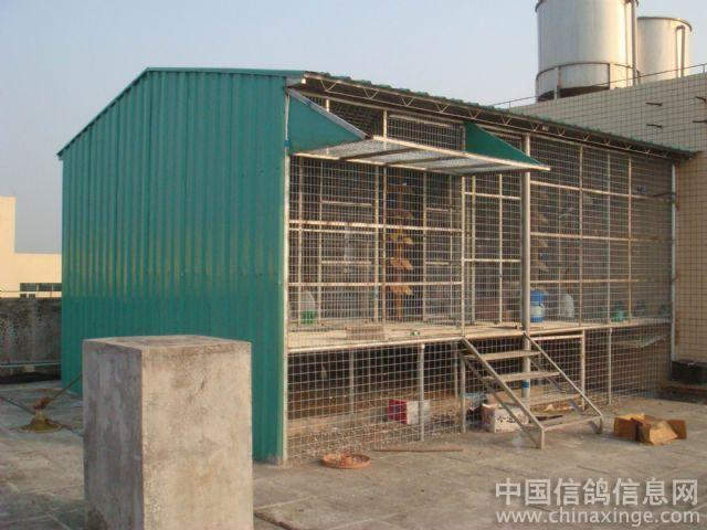 鹏程鸽舍--中国相册信息网信鸽钓邦视频器图片