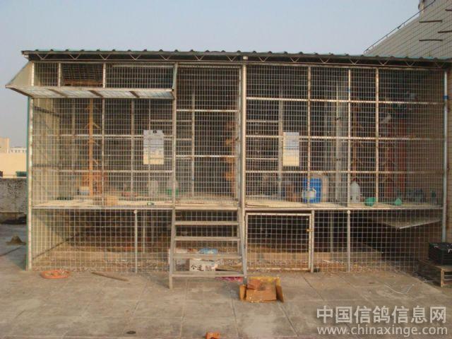 鹏程鸽舍--中国视频信息网相册回顾信鸽图片