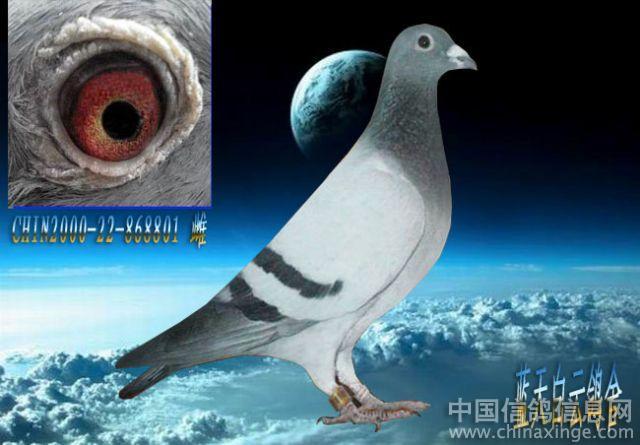 飞鹰蓝天白云; 蓝天白云绿草地鸽子图片展示下载;