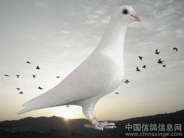我图网欧式白云鸽子桃花吊顶图