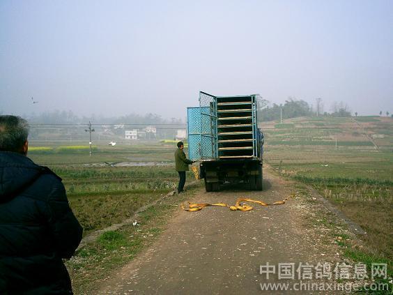 成都铁路局火车头信鸽协会垫江县分会,2009年春训梁平县屏锦镇.