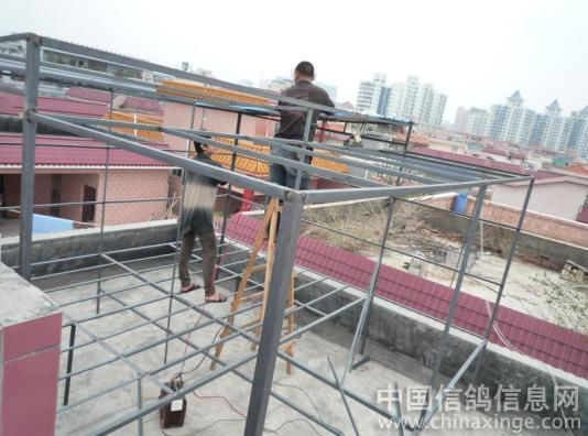 台湾鸽棚设计图_赛鸽鸽舍建造图片图片展示_赛鸽鸽舍建造图片相关图片下载