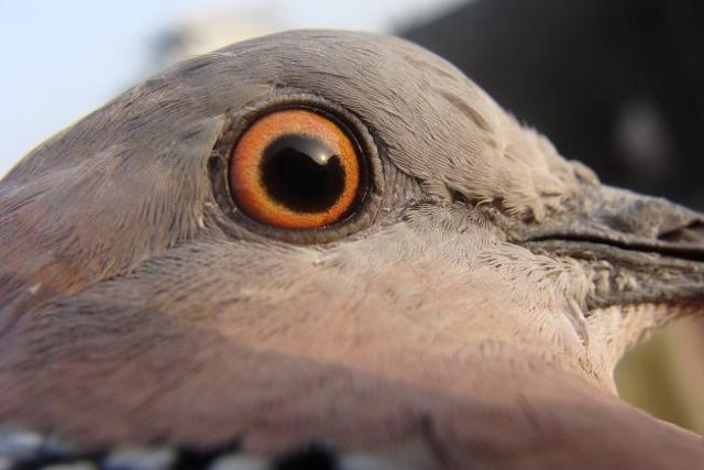 斑鸠打笼制作图解